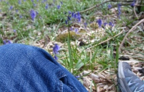 Sitting amongst the bluebells