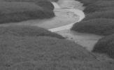 Salt marsh