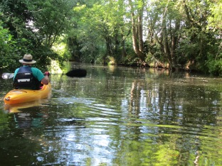 Paddling the Medway