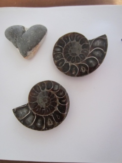 Not the local ammonites, but local heart!