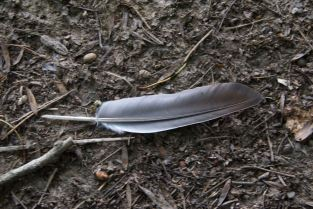 Feather (grey)