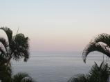 Palms / Sea