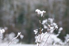 Grassy snow