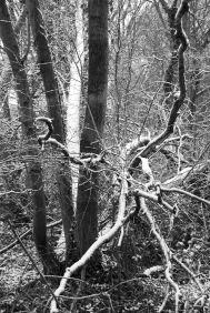 Tree writing