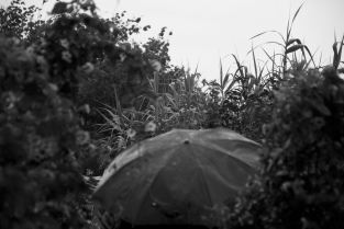 Brolly in the Jungle