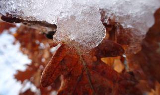 Oak ice