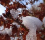 Snow / ice