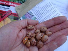 Bird's Egg Beans