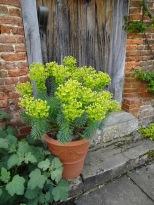 Door / Euphorbia