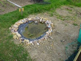 Plot but one's new pond