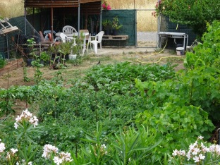 Greek Allotment
