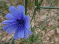 Delicate blue