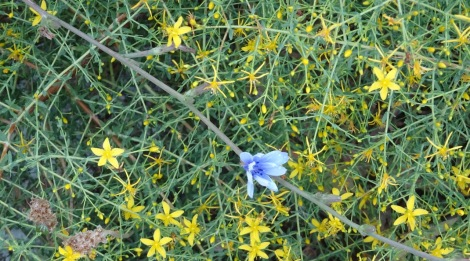Yellow / blue