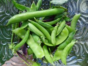 Beans / Peas