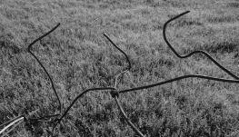 Wirey