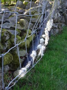 Woolly fence