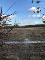 Path / Field