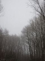 Trees in the Blizzard