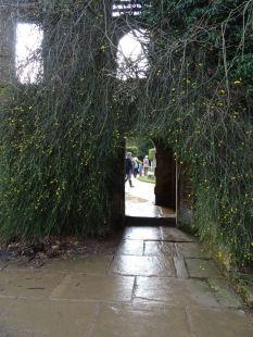 Jasmine doorway