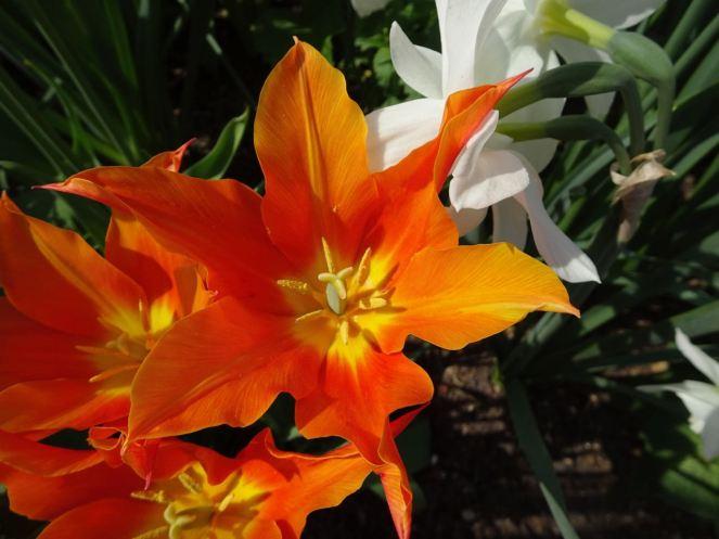 More orange than white