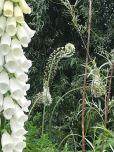 Curl (White Garden)