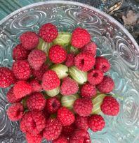 Rasps & Gooseberries