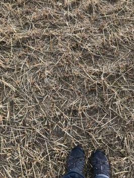 Straw feet
