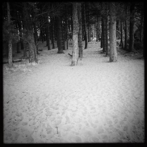 Trees / Beach