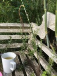 Tea, Fennel & Rosemary