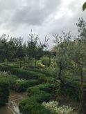 Stormy White Garden